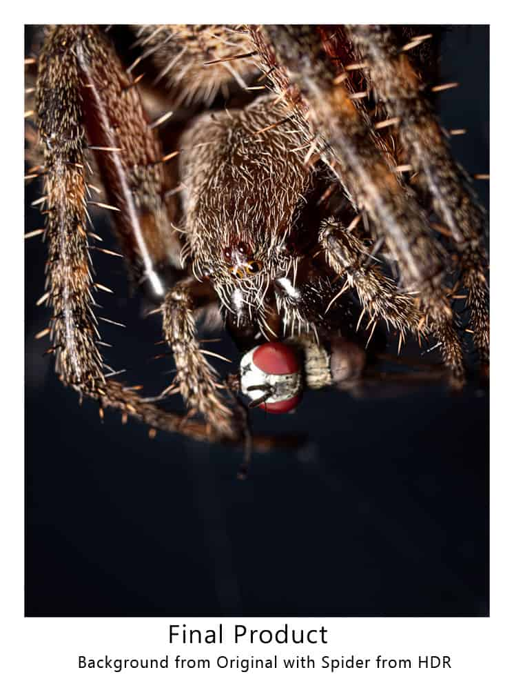 Tips For Speed Light Macro Photography