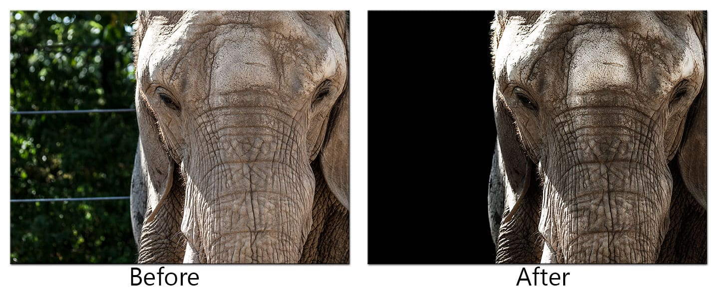 How To Post Process Animal Portraits