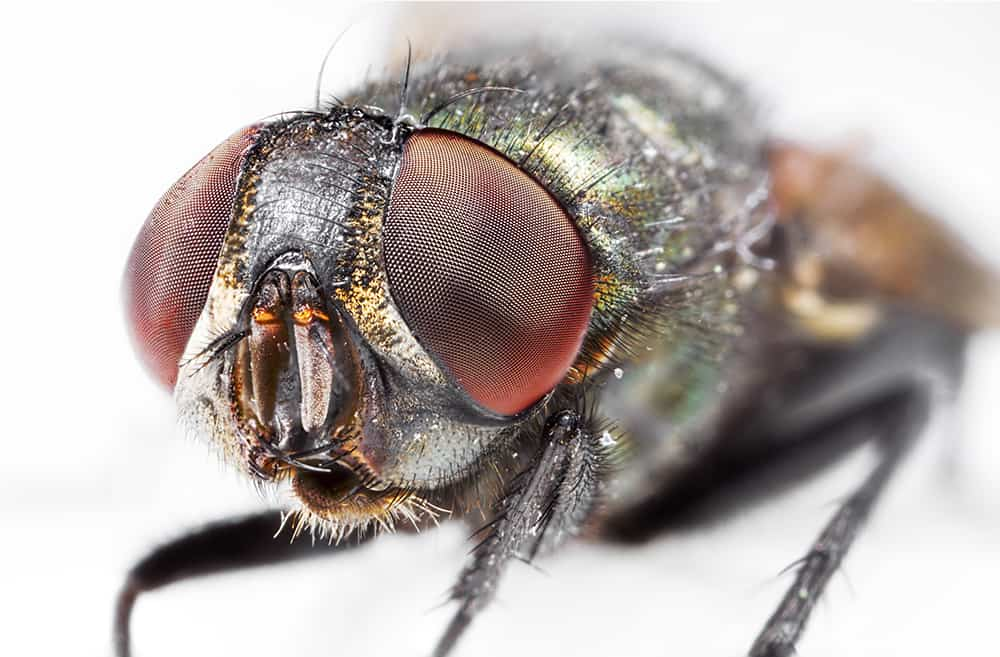 Fly Portrait 1