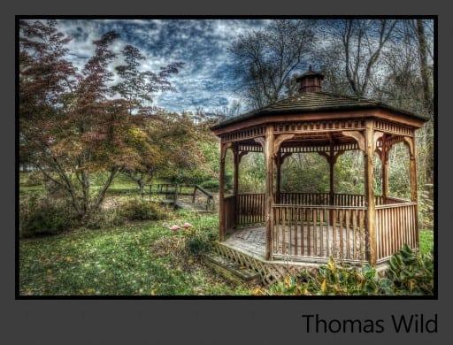 11a-Thomas-Wild