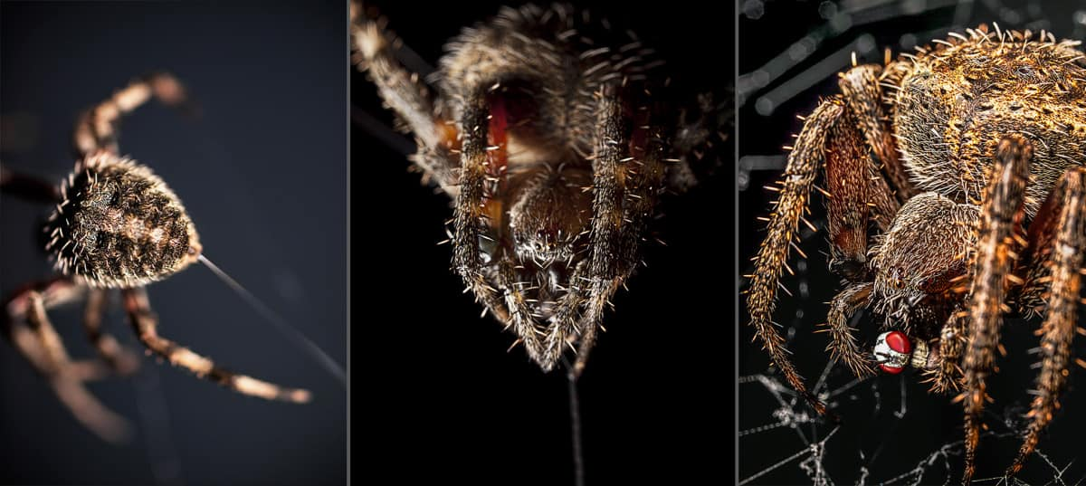 Spider-Spin-Web